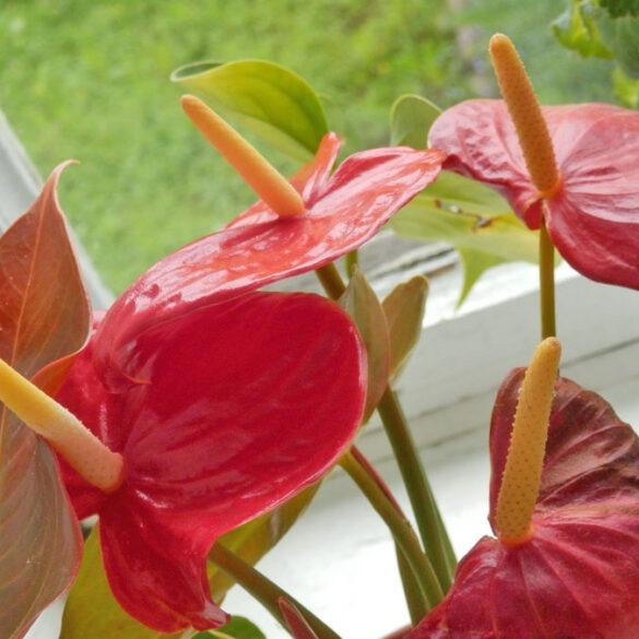 Боремся с вредителями комнатных растений