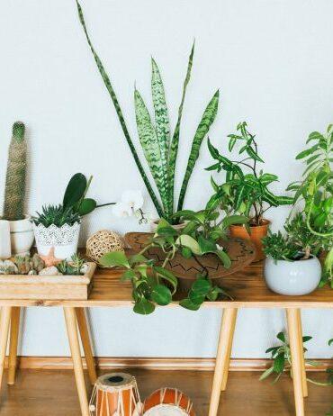 Индивидуальный-уход-за-капризными-растениями