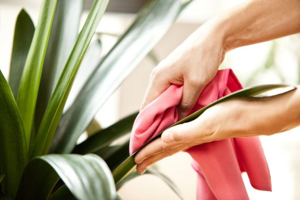 Наводим чистоту – Растения в Интерьере