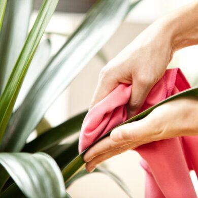 Наводим-чистоту-–-Растения-в-Интерьере