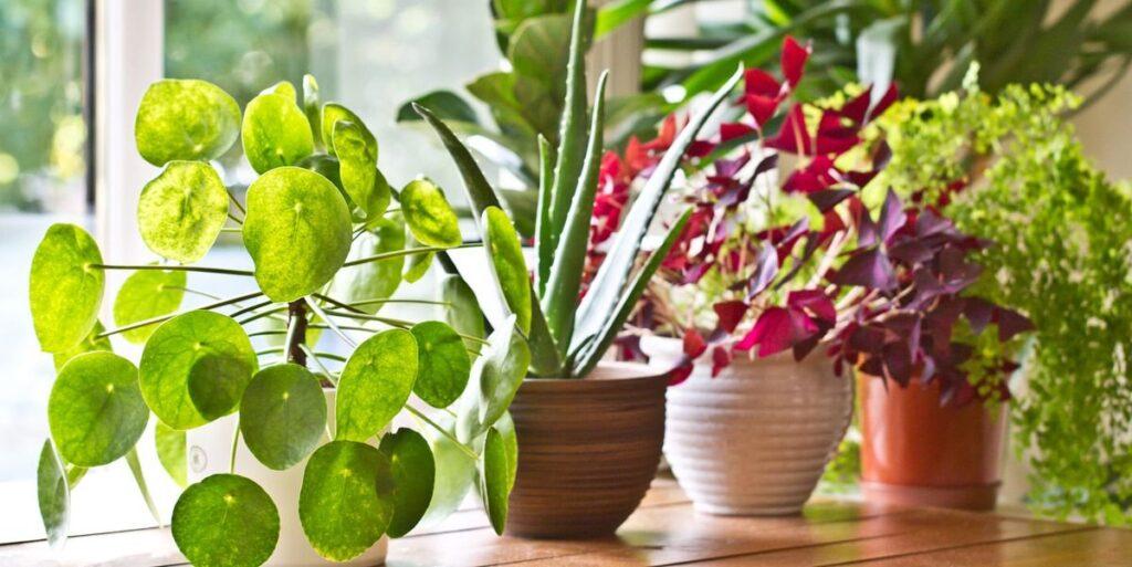 Освещение, температурный режим для комнатных растений