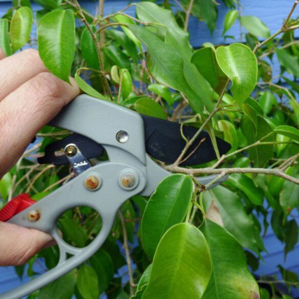 Пересадка и обрезка комнатных растений