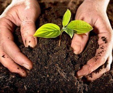 Почва. Растения в интерьере. Комнатные растения