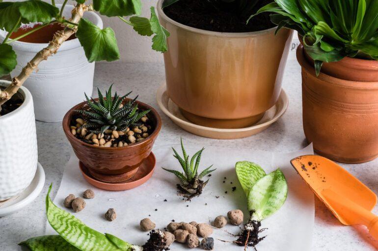 Размножение. Растения в интерьере. Комнатные растения